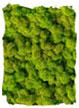 Rendiermos Lente Groen