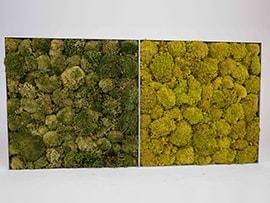 twee mosschilderijen rendiermos springgreen en mossgreen