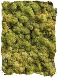 oldgreen