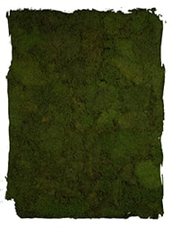 Platmos mos Groen