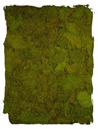 Platmos Lente Groen