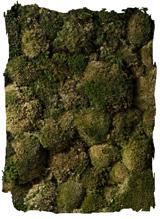 Bolmos mos groen klein