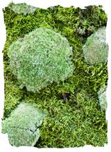 Mosmix natuur klein