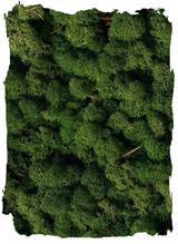 Rendiermos mos groen klein