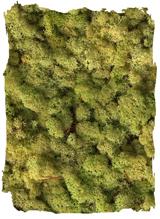 Rendiermos oud groen klein
