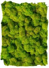 Rendiermos lente groen klein