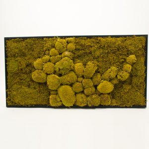 Mosschilderij bolmos