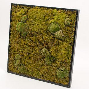 mosschilderij nature bolmos