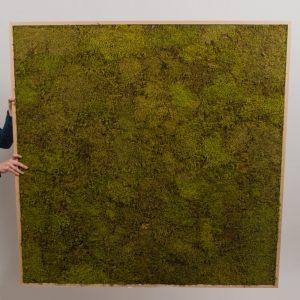 Platmos schilderij 120×120