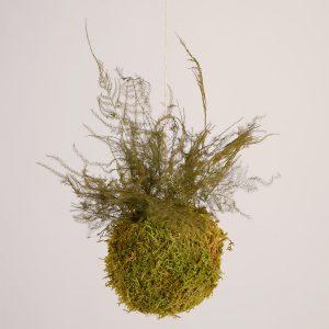 Kokedama SpringGreen Asparagus