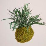 Hangende mosbol springgreen eucalyptus 15cm