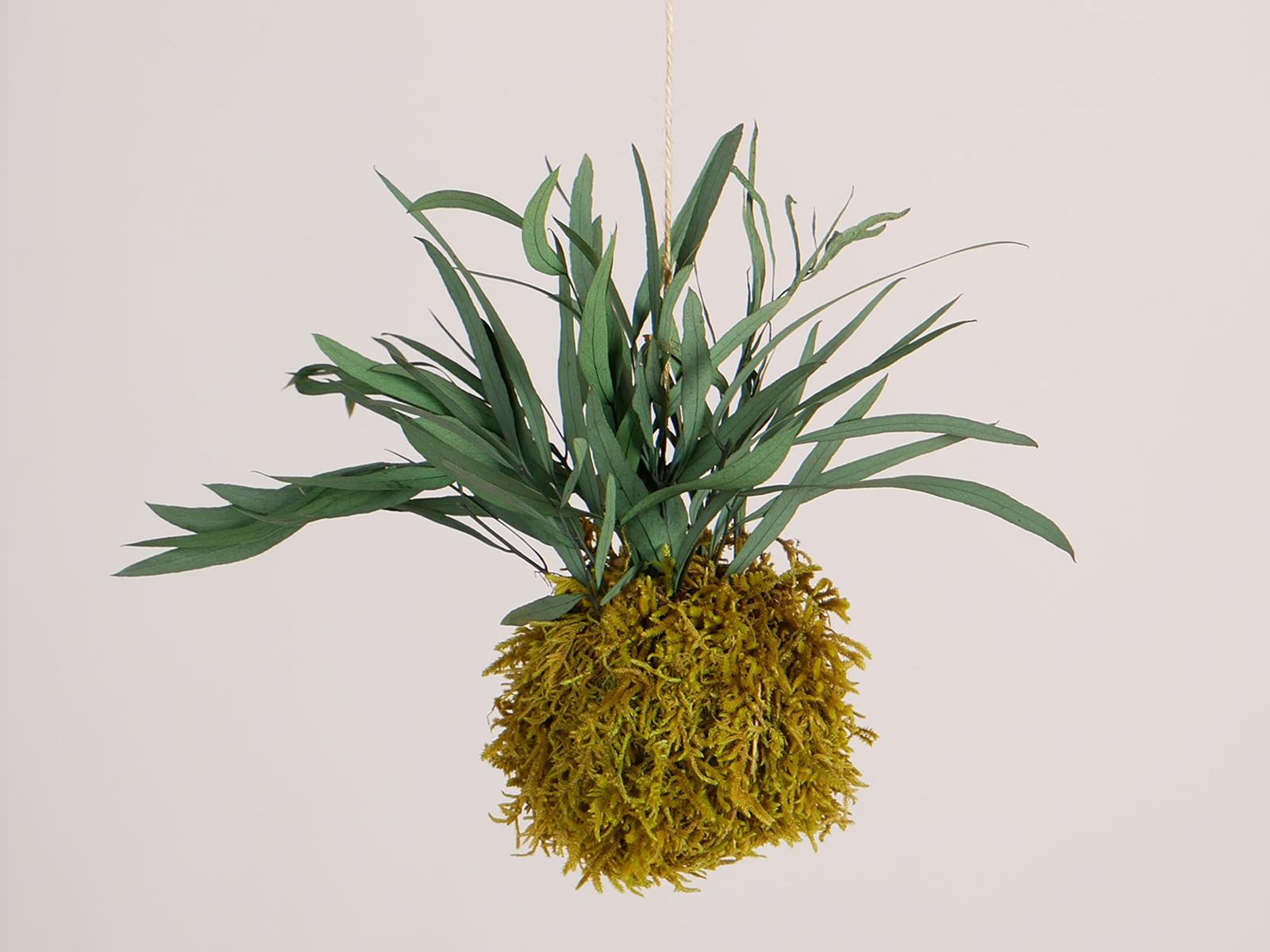 Hangende mosbol springgreen eucalyptus 9cm