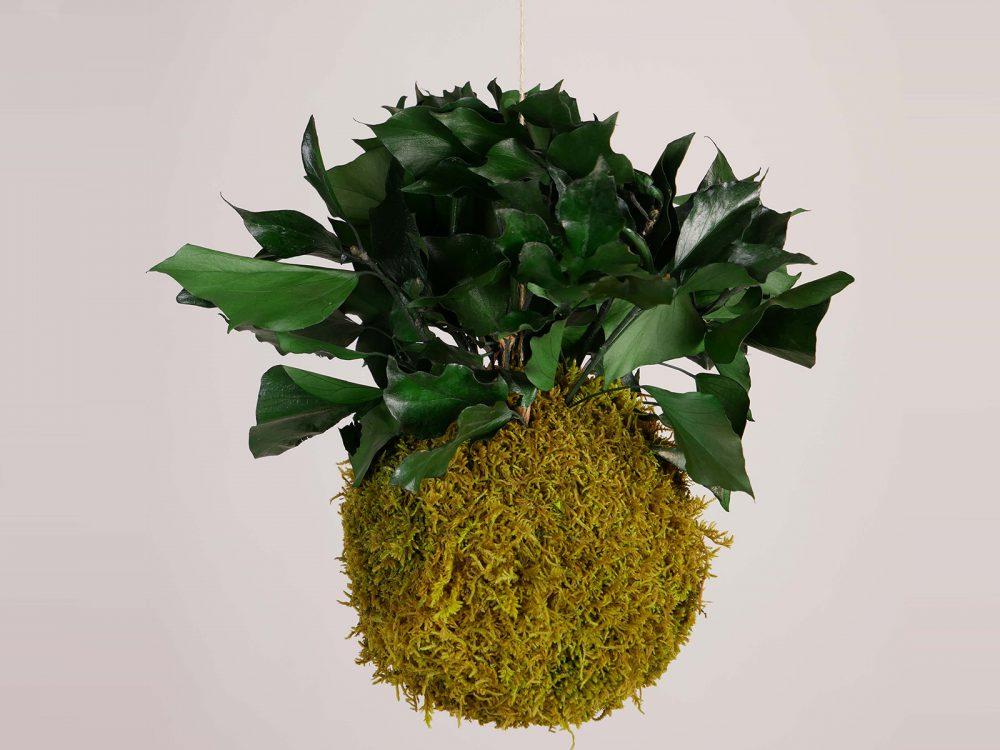 Hangende mosbol springgreen hedera 18cm