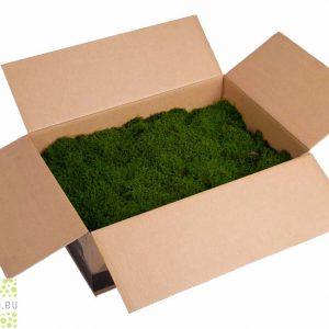 Platmos-Lappenmos geprepareerd in grote doos 'MossGreen'