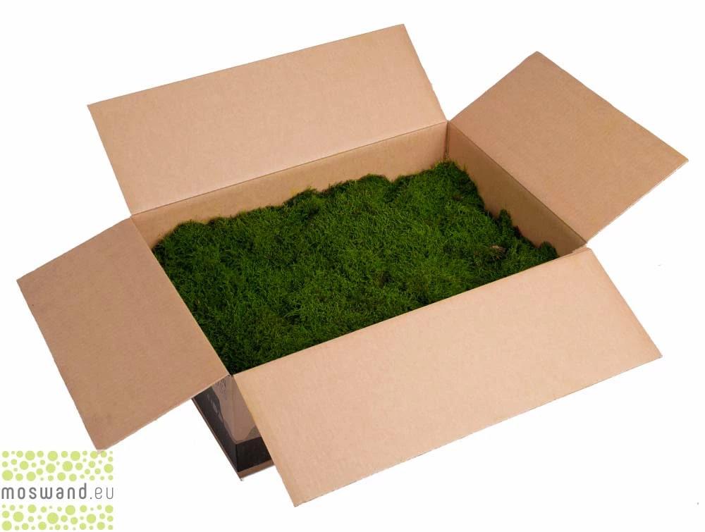 Platmos lappenmos mos groen