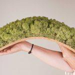 Kurk Rendiermos middel groen