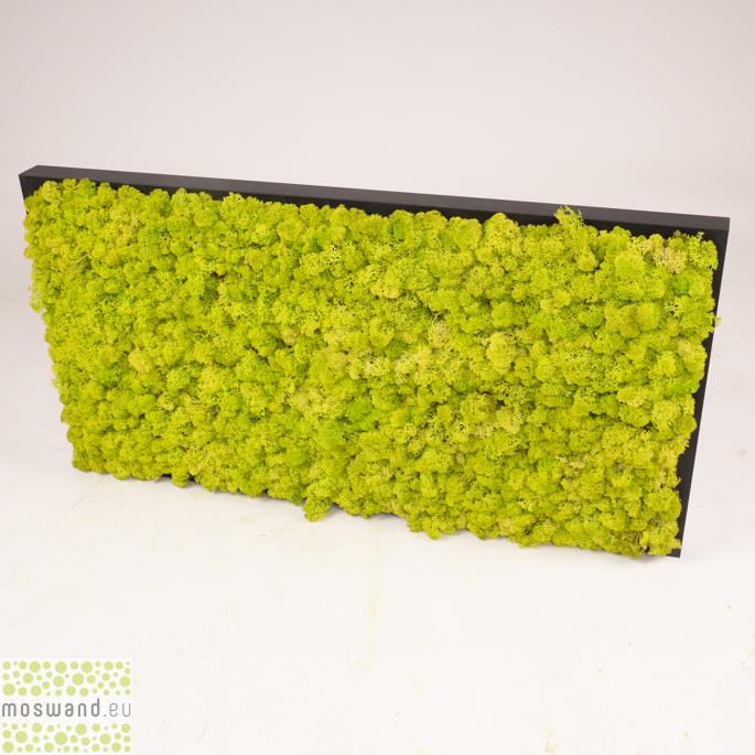 Mosschilderij 80 x 40 cm. Spring Green