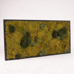 Mosschilderij 100 x 50 cm. MossMix 'Nature'