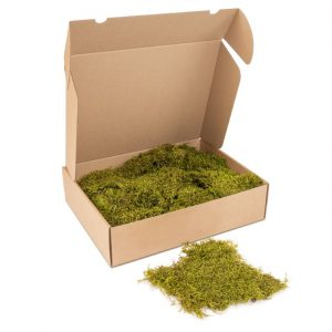 Kleine doos Platmos'SpringGreen'