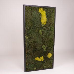 Mosschilderij 49 x 98 cm. MossMix 'Nature'