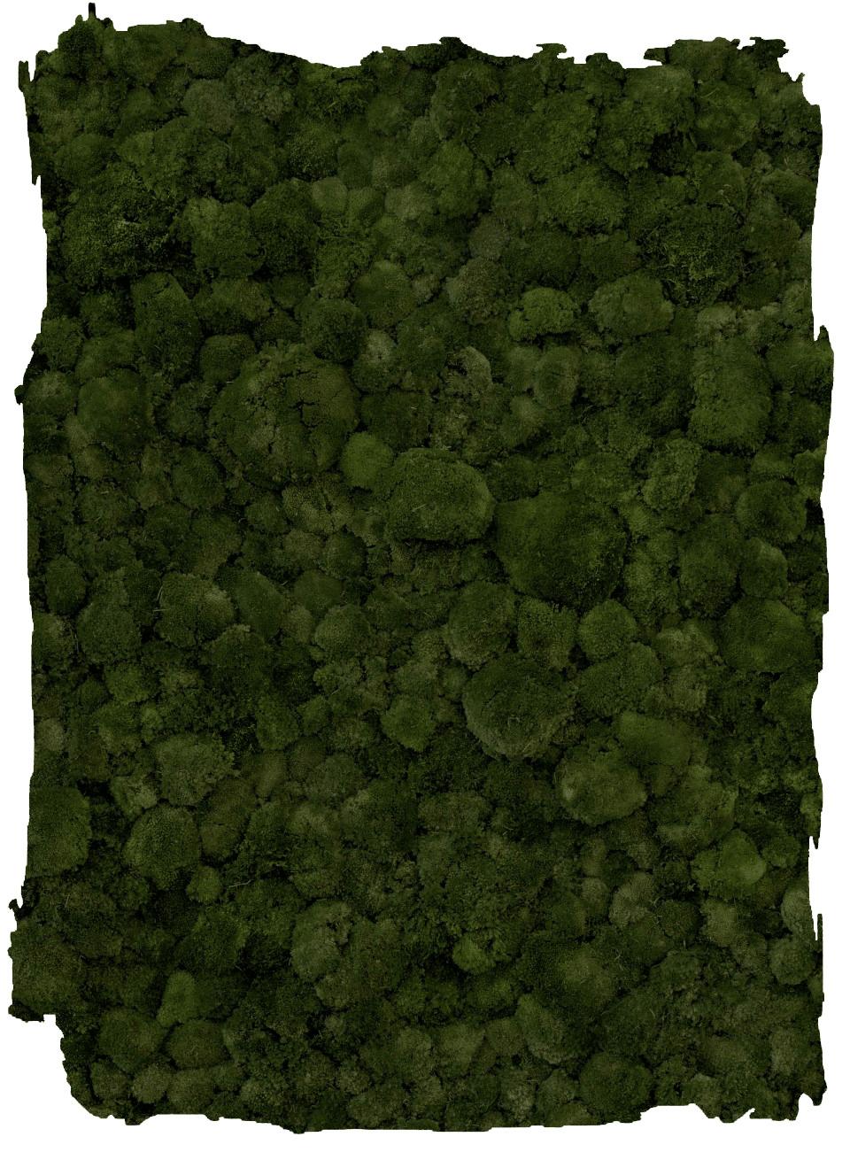 Bolmos Moss Green