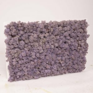 Mosschilderij 60×40 cm (bxh). Rendiermos 'Lavendel' wit houten lijst