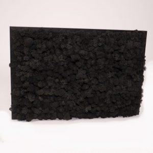 Mosschilderij 60×40 cm (bxh). Rendiermos 'Zwart' met zwart houten lijst