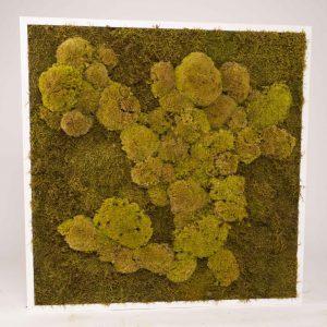 Mosschilderij 60×60 cm. mix bol en platmos springgreen lijst wit hout
