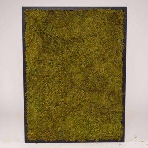 Mosschilderij 60×80 cm. platmos springgreen zwarte houten lijst