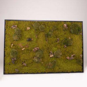 Mosschilderij 127,5×84,5 cm (bxh). 'Forest' in zwart houten lijst A
