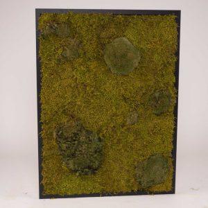 Mosschilderij 60×80 cm (bxh). MossMix 'Nature' A