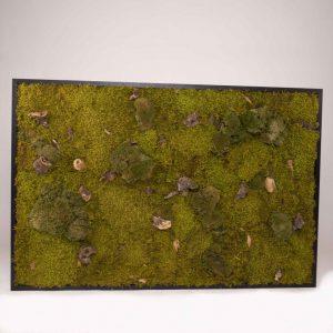 Mosschilderij 127,5×84,5 cm (bxh). 'Forest' in zwart houten lijst B