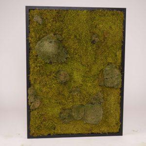 Mosschilderij 60×80 cm (bxh). MossMix 'Nature' B