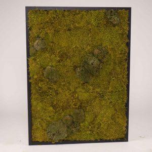 Mosschilderij 60×80 cm (bxh). MossMix 'Nature' C