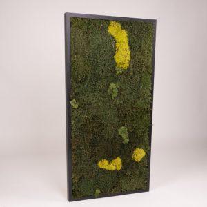 Mosschilderij 49 x 98 cm (bxh). MossMix 'Nature'