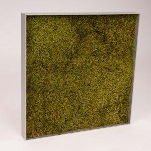 Mosschilderij 45,8×45,8 cm. Platmos 'SpringGreen'in aluminium lijst