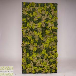 Mosschilderij rendiermos mix 3 kleuren 60×120 cm. lijst zwart hout