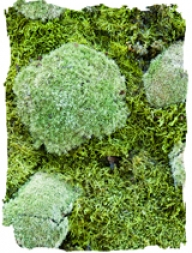 mossmix_nature_thumb