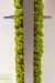 mobiele-moswand-springgreen-160x160-cm-2