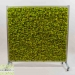 mobiele-moswand-springgreen-160x160-cm-1